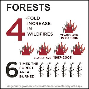 Climate Change Forest Infographic